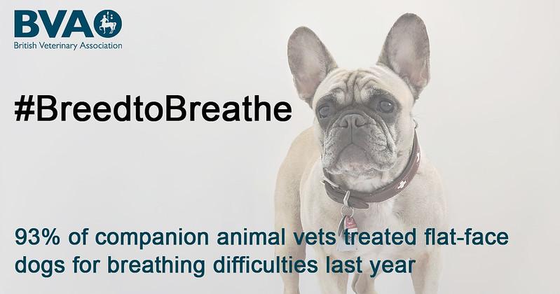 SocialMedia-Motiv aus der Qualzuchtkampagne des britischen Tierärzteverbandes (BVA)
