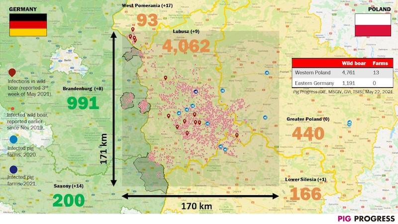 Karte Ausbreitung Afrikanische Schweinepest (ASP) im deutsch-polnischen Grenzgebiet – Quelle: PigProgress