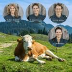 Montage Praxisteam 4 Portraits mit Kuh