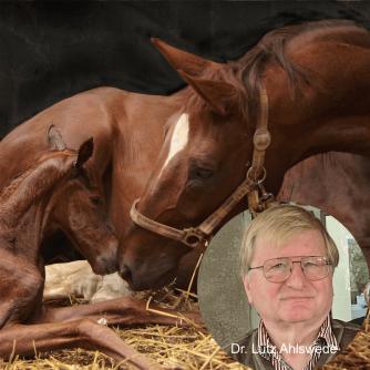 Montage Portrait Dr. Lutz Ahlswede plus Stute mit Fohlen